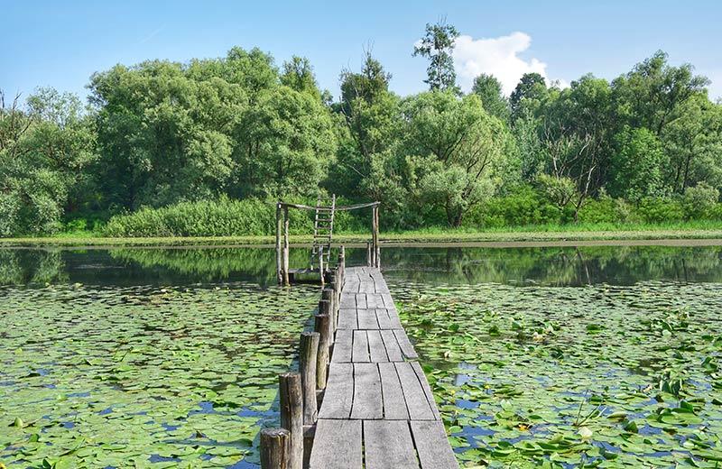 Veličanstveni svijet prirode: upoznajte Lonjsko polje, dom omiljenih životinja