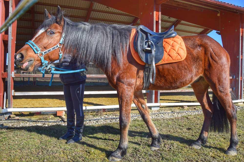 Centar Ritam s konjem