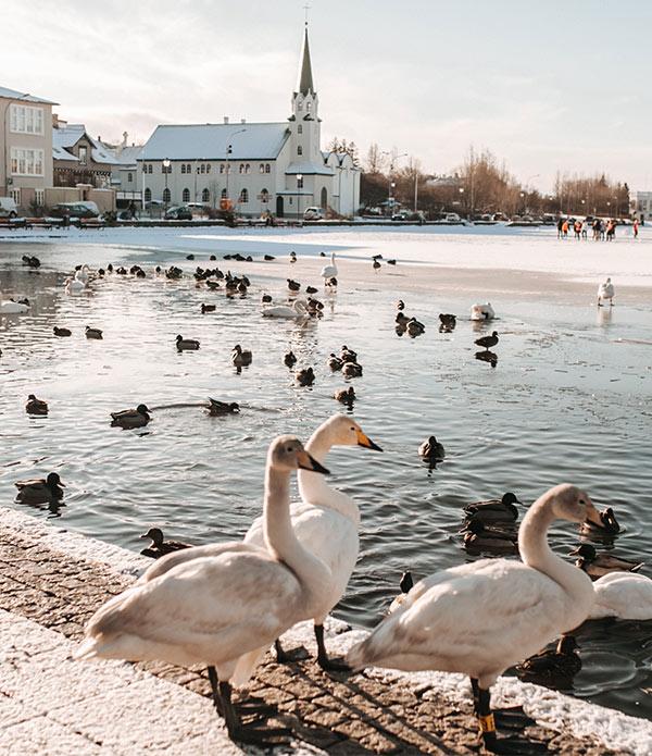 Zemlja vatre, leda i najsretnijih ljudi na svijetu: život na čarobnom Islandu