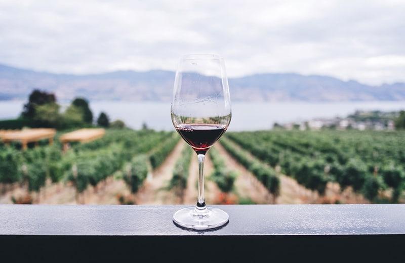 Raj za hedoniste i ljubitelje vina: najljepše vinarije u Hrvatskoj koje morate posjetiti