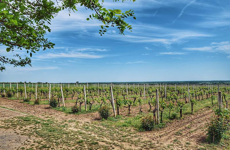 Slavonija - hrvatska Toscana
